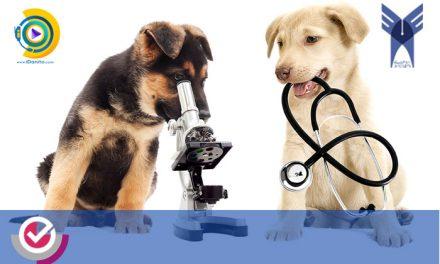 حداقل درصد دروس و آخرین رتبه قبولی دامپزشکی آزاد 99