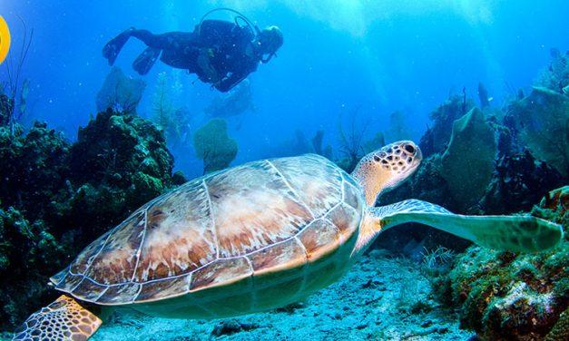 معرفی گرایش های ارشد زیست شناسی دریا