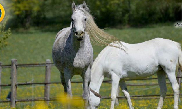 کاردانی علمی کاربردی پرورش اسب