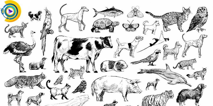 انتخاب رشته دکتری زیست شناسی جانوری 98