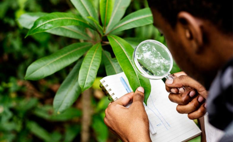 ارشد زیست شناسی گیاهی