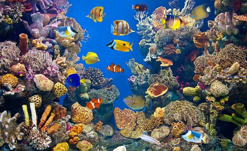 ارشد زیست شناسی دریا