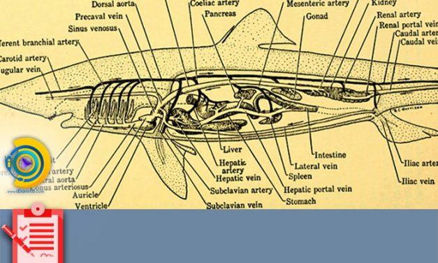 انتخاب رشته ارشد زیست شناسی جانوری 98