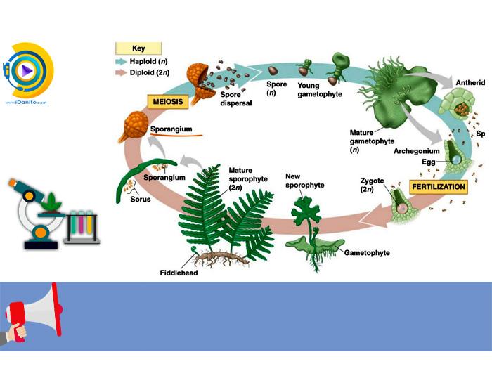معرفی گرایش های ارشد زیست شناسی گیاهی