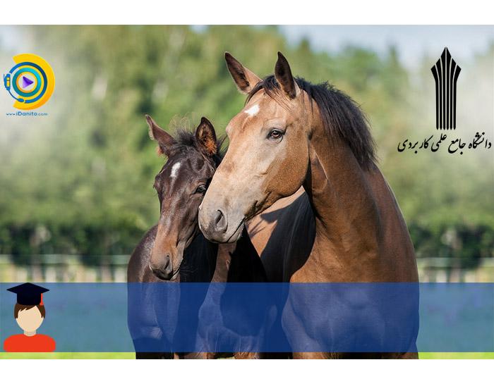 زمان و شرایط ثبت نام کاردانی به کارشناسی بدون کنکور علمی کاربردی پرورش اسب 98